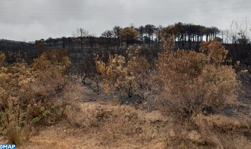السيطرة شبه نهائيا على حريق غابة حوز الملاليين بعمالة المضيق-الفنيدق