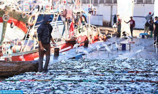 ارتفاع قيمة منتوجات الصيد المسوقة على مستوى ميناء آسفي بنسبة 33 بالمئة إلى غاية متم غشت الماضي (المكتب الوطني للصيد)