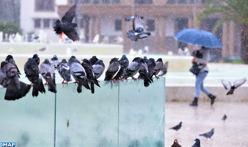 أمطار رعدية قوية اليوم الخميس وغدا الجمعة بعدد من أقاليم المملكة (نشرة خاصة)