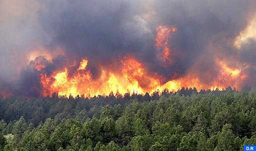 Province de Khemisset : plus de 22 hectares des terres agricoles ravagées par les feux