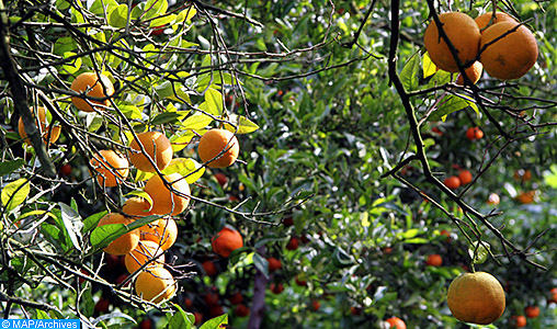 Levée de la suspension provisoire d'exportation des agrumes de la région de Berkane vers les USA (ONSSA)