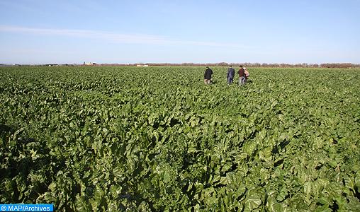 Agriculture: des efforts soutenus pour une croissance durable