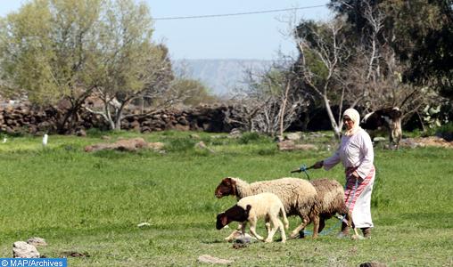 Près de 7 MMDH pour la réduction des disparités en milieu rural dans la région Fès-Meknès