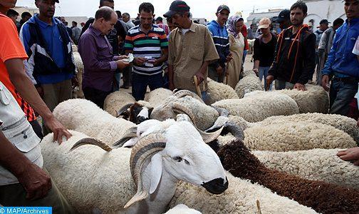 """Aid Al Adha 1440: l'opération d'abattage s'est déroulée dans """"de bonnes conditions"""""""