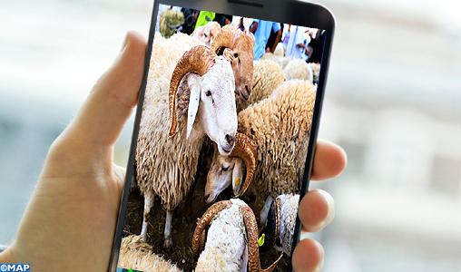 Achat du mouton d'Al Aïd sur le net, une pratique en devenir appelée à un grand avenir