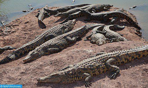 Le plus grand nénuphar du monde au Crocoparc d'Agadir