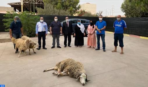 Agadir: La famille de la justice partage la joie de l'Aid avec les personnes en situation de vulnérabilité