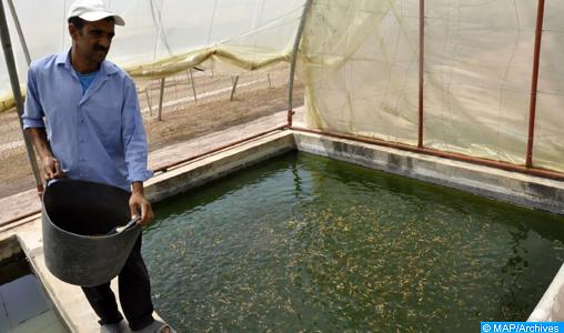 L'aquaculture, un véritable levier de développement dans la région Dakhla-Oued Eddahab