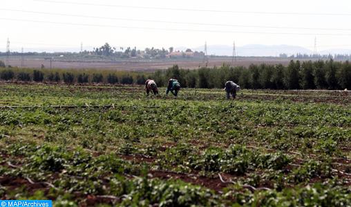 Agriculture/Pluies: L'année s'annonce prometteuse