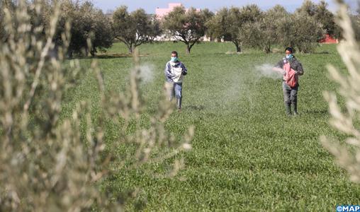 El Hajeb : Une campagne agricole prometteuse à la faveur des dernières pluies