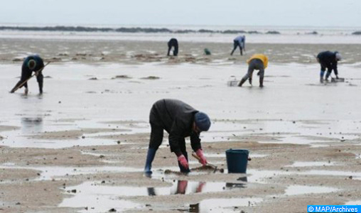 Agadir: interdiction de la récolte et de la commercialisation des coquillages issus de la zone conchylicole Douira-Sidi R'bat (ministère)