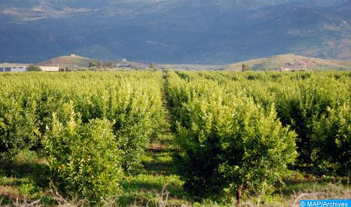Agropôle de Béni Mellal: une plateforme majeure de la transition agroalimentaire