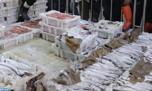 Tan-Tan : Débarquement de 108.000 tonnes de poisson d'une valeur de 1046 MDH en 2020